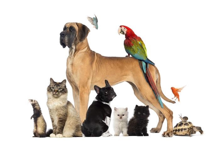 mascotas_reunidas