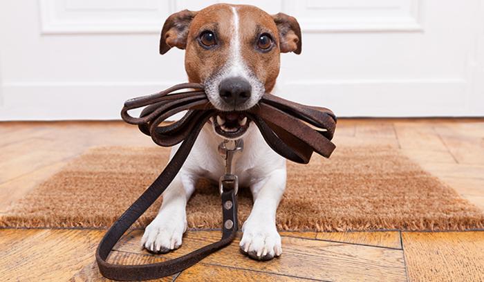¿Se pueden tener mascotas en un piso en alquiler?