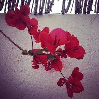 """""""No hay joya mejor que una flor"""""""
