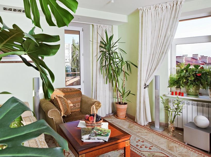 Como cuidar tus plantas de interior en invierno