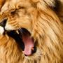 Cláusulas leoninas en contrato de alquiler de vivienda