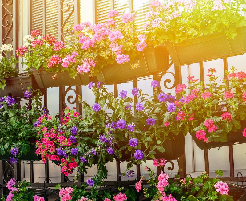 Macetas con plantas y flores en piso de alquiler