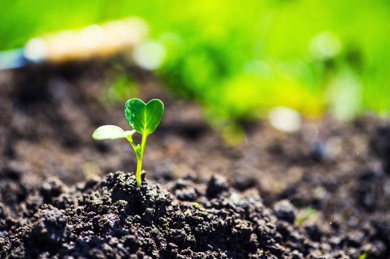 Plantar un árbol en comunidad de vecinos