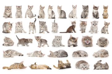 Gatos en piso de alquiler