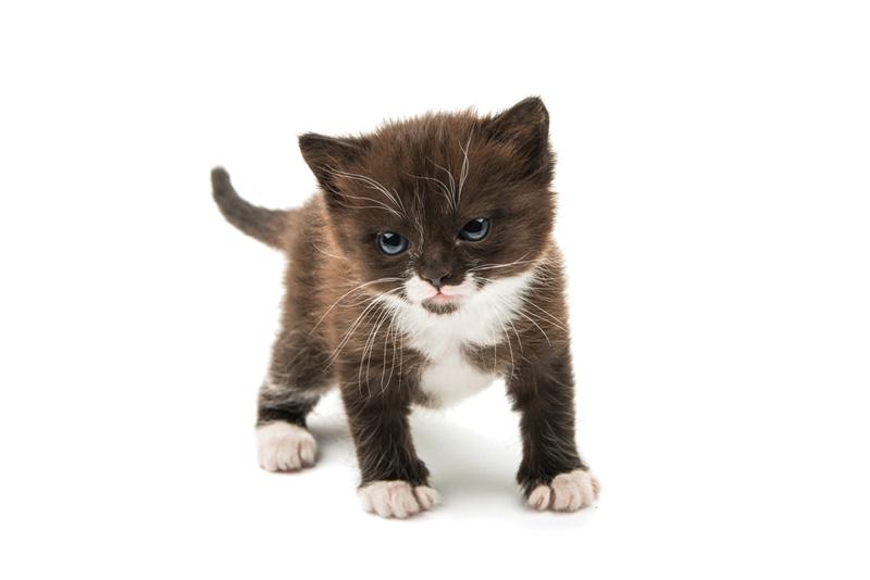 gatito en piso de alquiler, prohibido por contrato