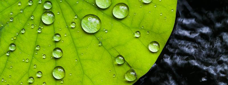 agua en planta