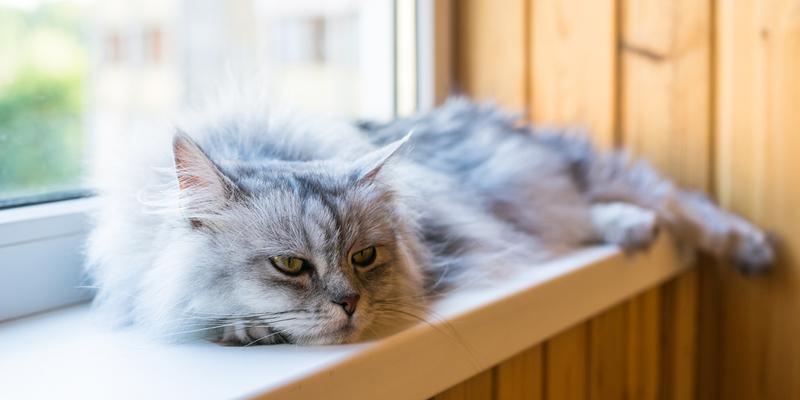 mascotas en pisos en alquiler - gato