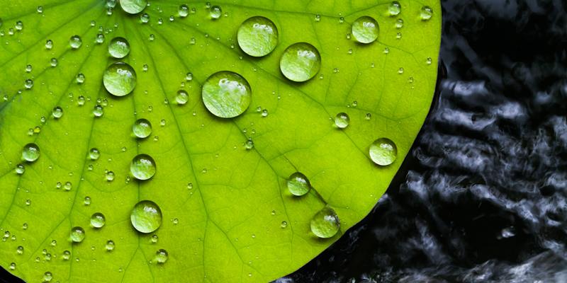 planta con gotas de agua