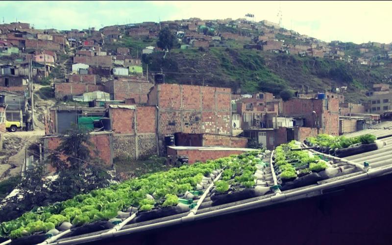 Techos verdes y ecologicos: Ecotechos