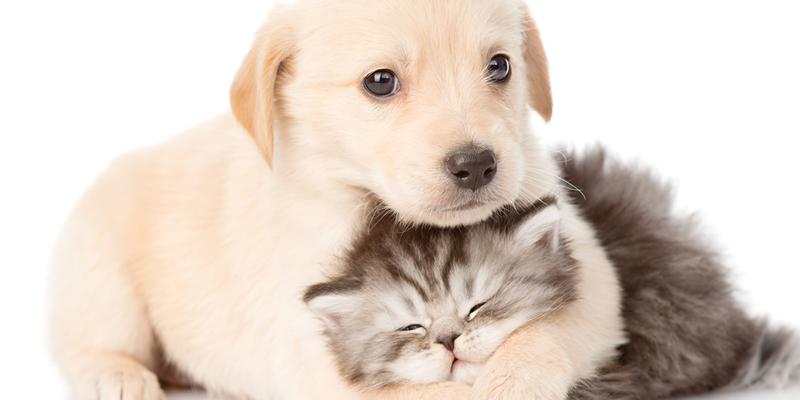 mascotas en pisos en alquiler