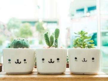 Cómo cultivar un cactus