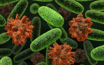 bacterias estómago