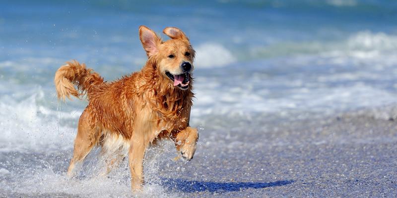 playas con perros