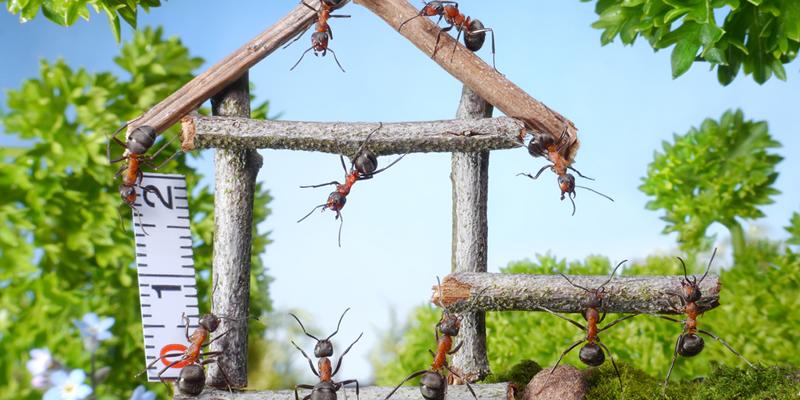 piso en alquiler con hormigas