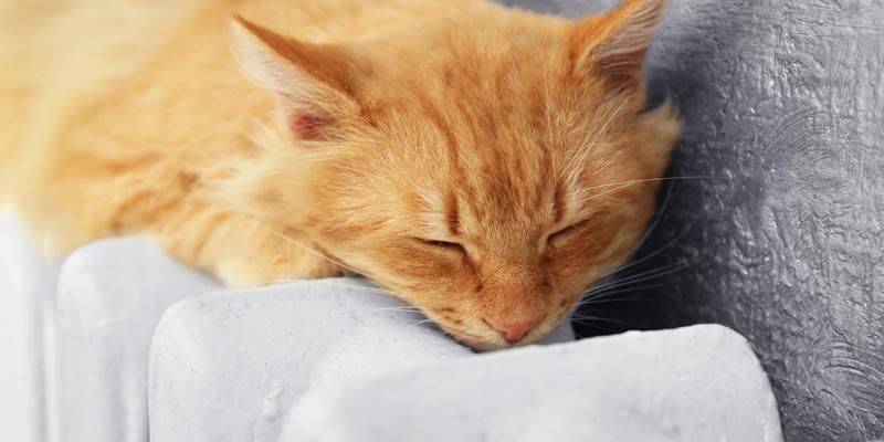 gato sobre radiador de calefacción