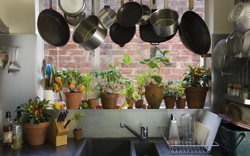 cocina con plantas en piso en alquiler