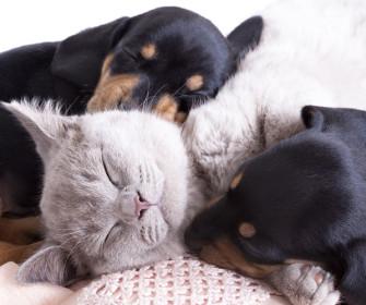mascotas durmiendo en pisos en alquiler