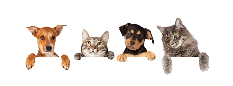 perros y gatos en pisos en alquiler