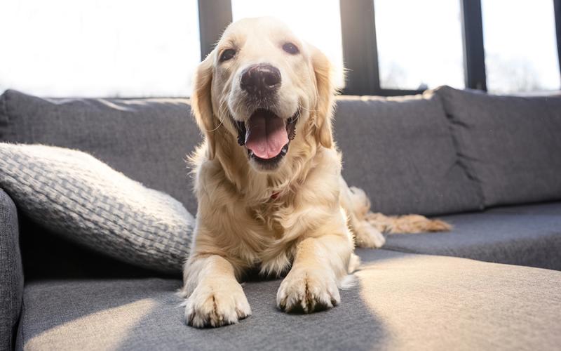 perro en piso en alquiler