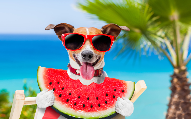 perro en verano fresquito
