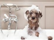 perro en bano