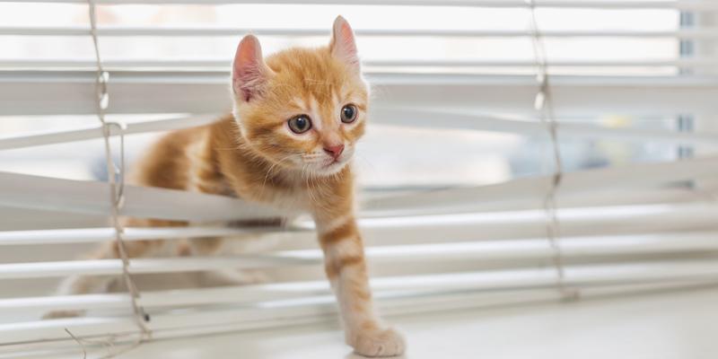 gato entrando por ventana con persiana